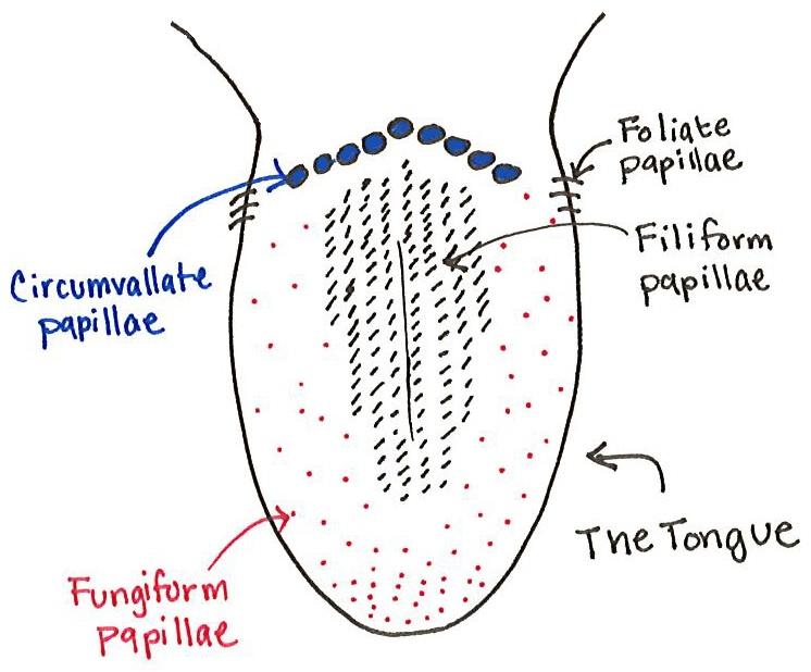 tonguepic