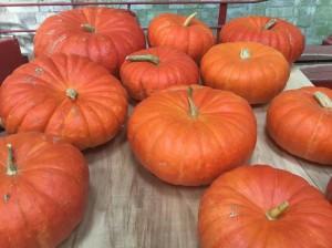 Rouge VIF D'Etampes Pumpkins